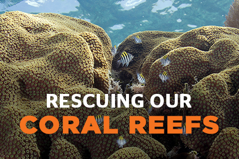 Rescuing Our Coral Reefs