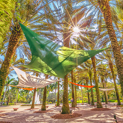 Canopies float among the palm trees on the Coral Gables Campus. Photo: Mike Montero/University of Miami