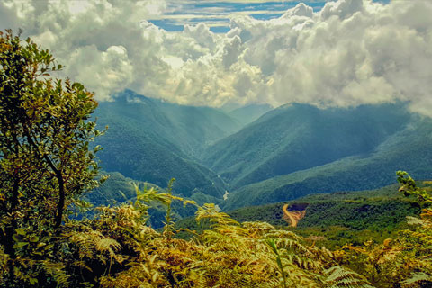 tropical and subtropical forests across South America's Andes Mountains