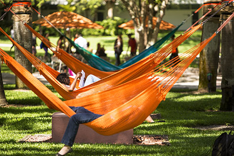 UM students studying in hammocks.